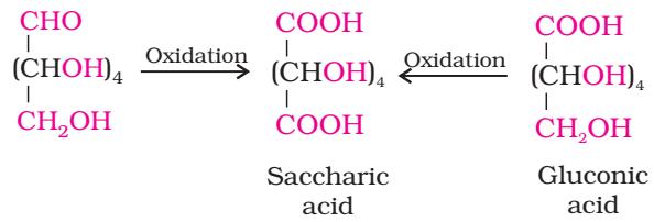 Glucose Oxidation