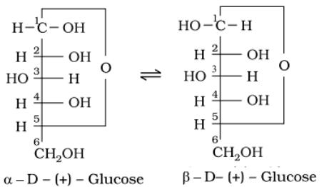 α-D-glucose and β-D-glucose