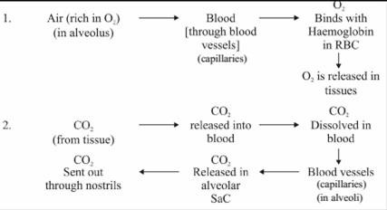 Exchange of Gases between alveolus blood and tissues