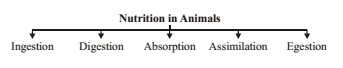 Nutrition in Animal