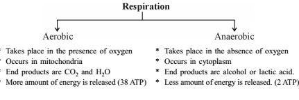 Tyoes of Respiration