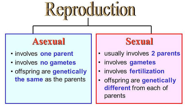 TYPE OF REPRODUCTION